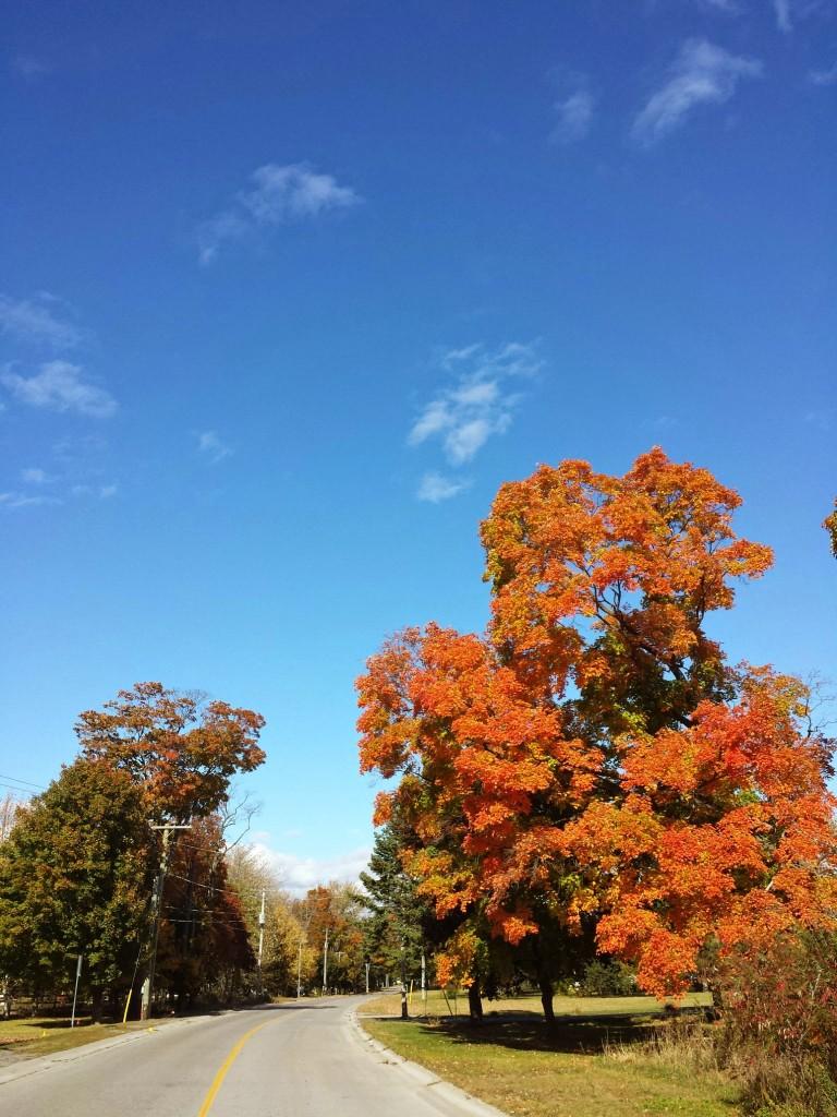 La Fille Voyage - Roadtrip van Westfalia Ontario